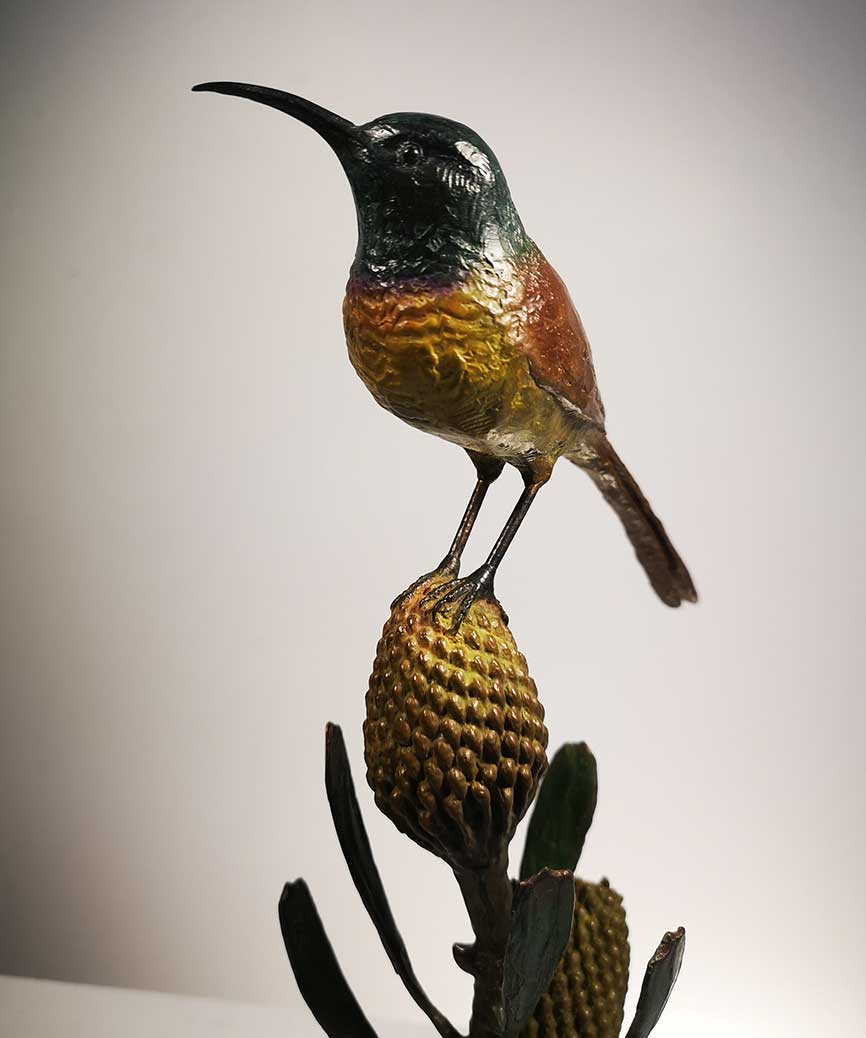 Chris Bladen Orange Breasted Sunbird